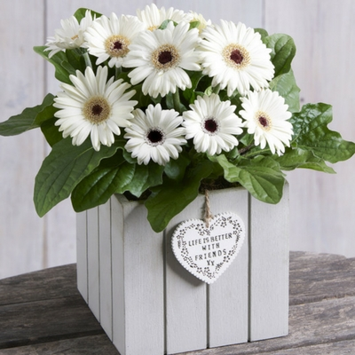 Gerbera gift next - win flowers in time for Valentines Day
